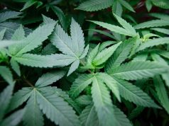 Marijuana Legalization In Asbury Park Supported And Doubted