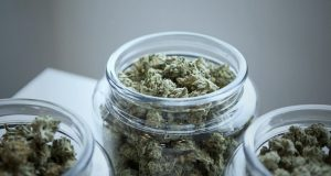 Medical Marijuana Might Be On Shortage For Patients